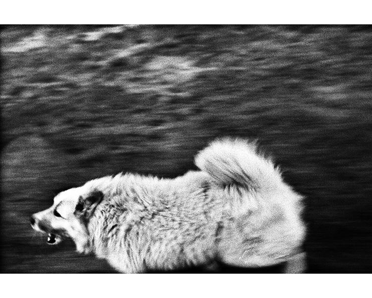 ICELAND / 09.2010Dog chasing car.© Michal Luczak / Sputnik Photos / Anzenberger
