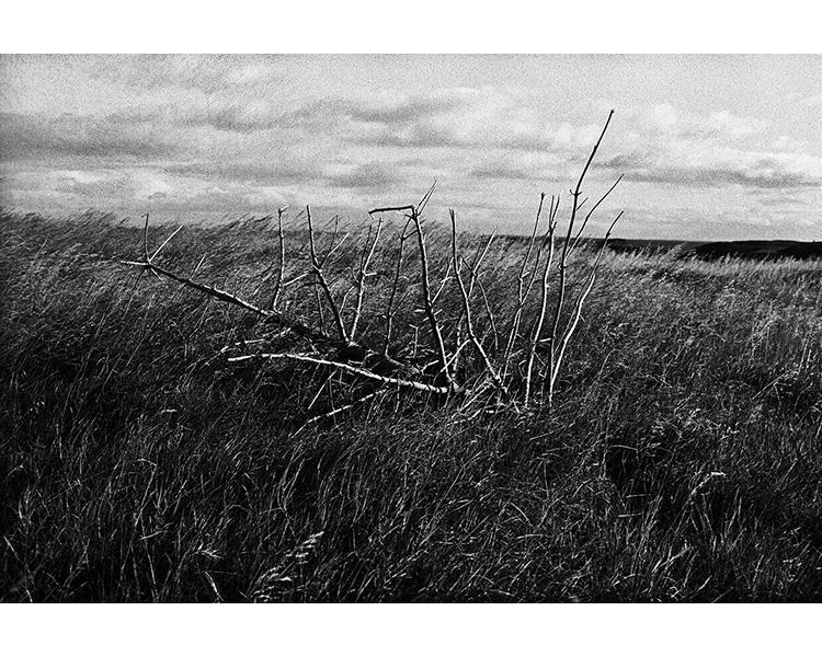 ICELAND / 09.2010A dead Christmas tree on Flatey island. © Michal Luczak / Sputnik Photos / Anzenberger