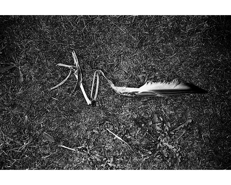 ICELAND / 09.2010Bird wing.© Michal Luczak / Sputnik Photos / Anzenberger