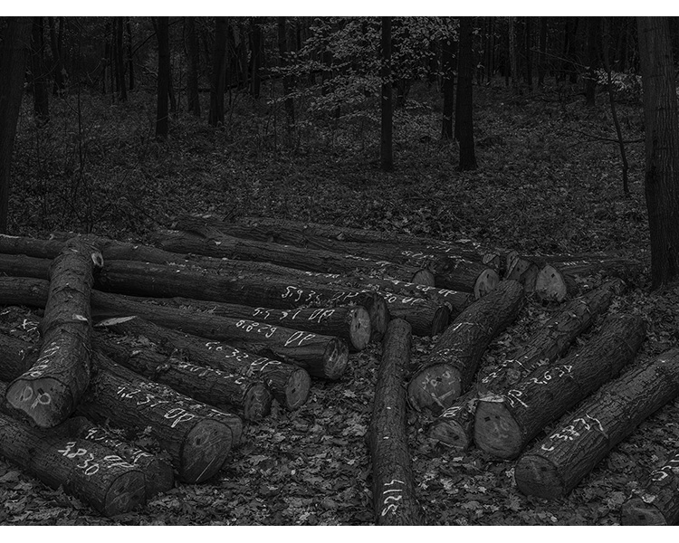 forest_works_002