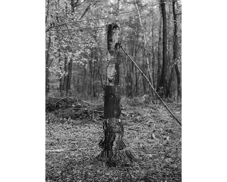 forest_works_005