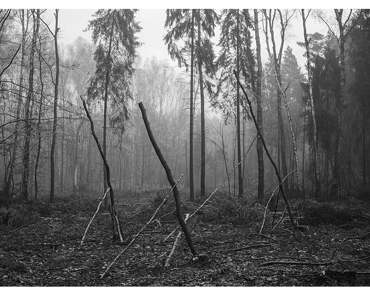 forest_works_006