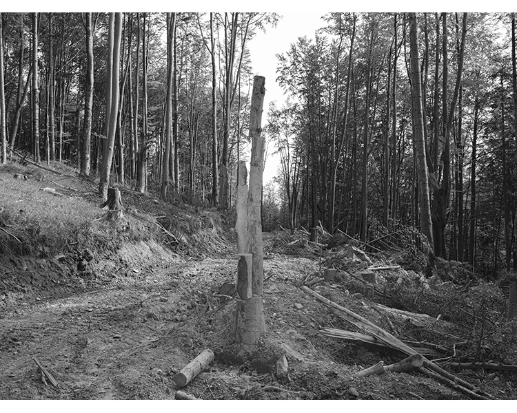 forest_works_008