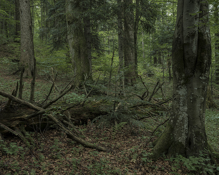 forest_works_010
