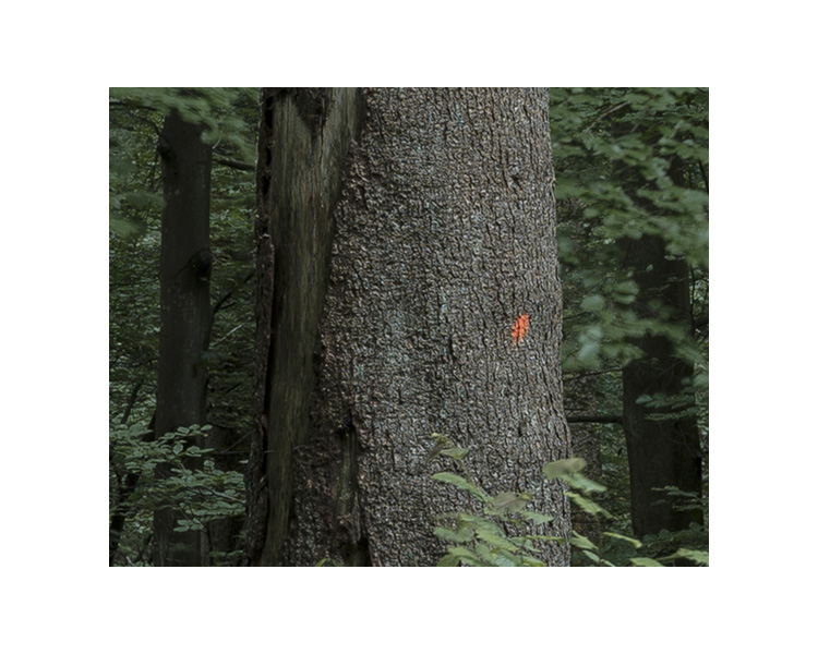 forest_works_011