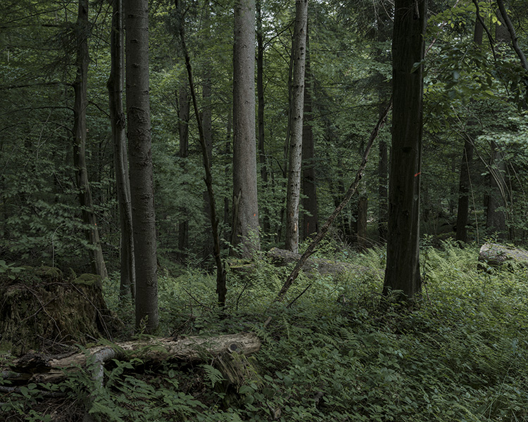 forest_works_012